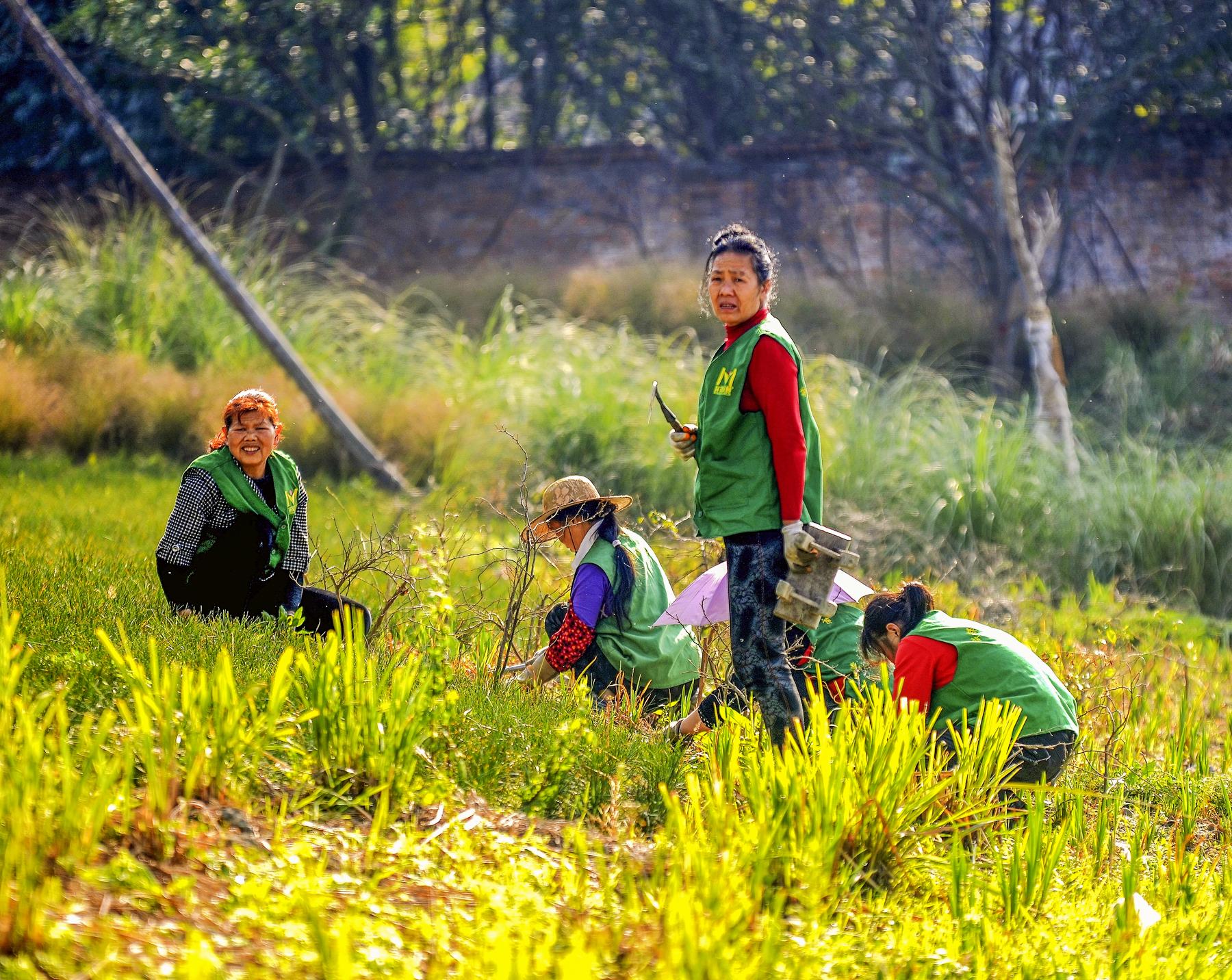 细处的杂乱,微处的不同,在工人们无数次拔除的俯身与起腰间,全部归于和谐统一,呈现出草地最美的姿态。.jpg